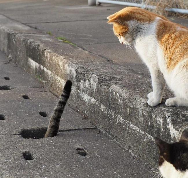 路上の野良猫