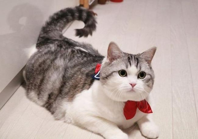 セイラー服風猫用首輪