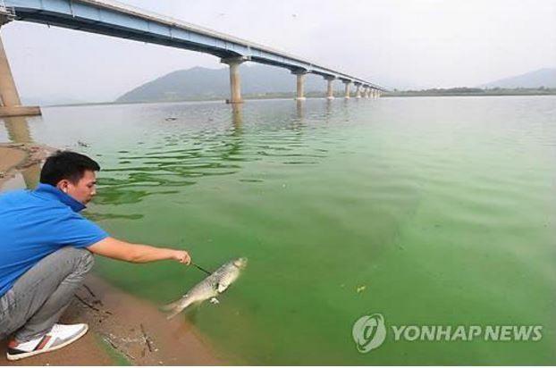 韓国の川から魚が消滅!」韓国人...