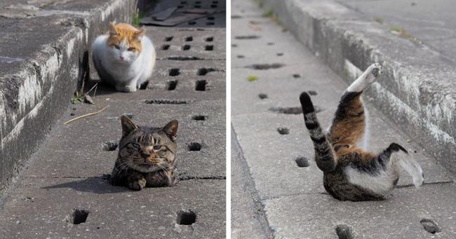 日本の野良猫
