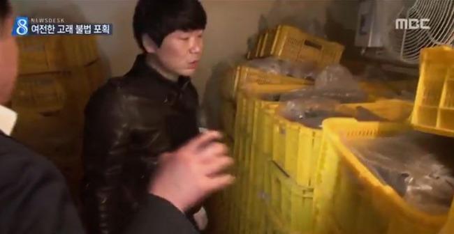 韓国でミンククジラの密漁