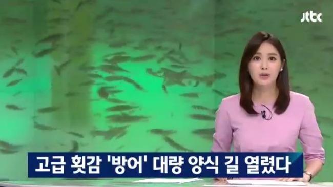 韓国がブリ養殖