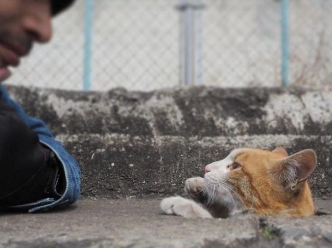 野良猫観察