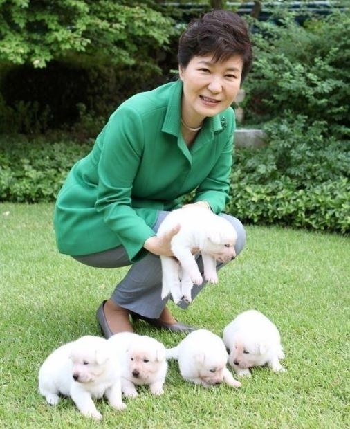 朴槿恵前大統領が珍島犬を置くて行く