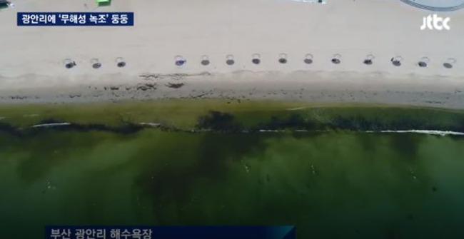 釜山の海水浴場に藻が発生