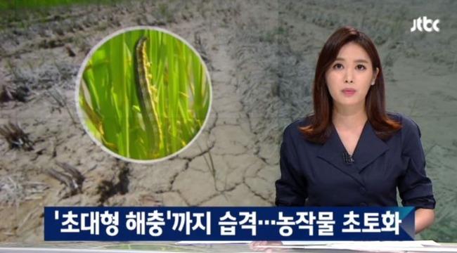 韓国の旱魃で大型害虫が発生