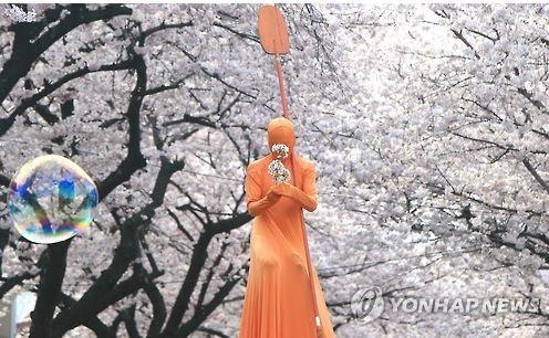 韓国の花見