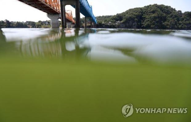韓国で緑藻が大発生