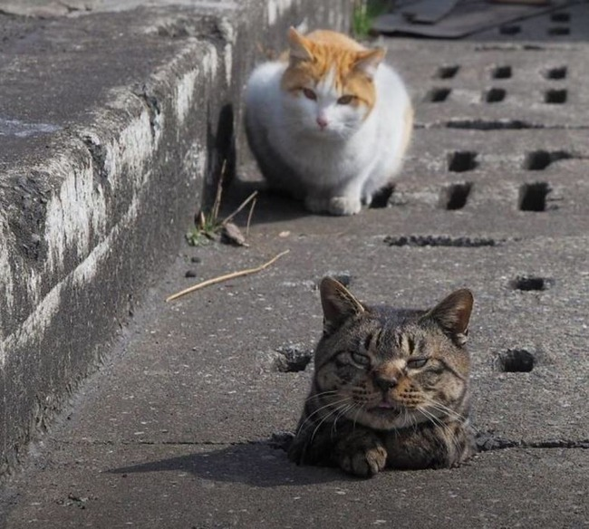 側溝で遊ぶ野良猫