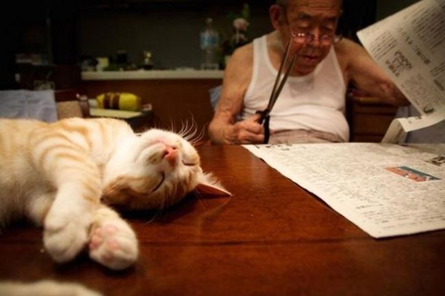喜びを与えてくれる赤猫