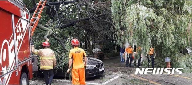 ソウルで街路樹が倒れる