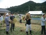 稲刈り15