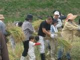 稲刈り18