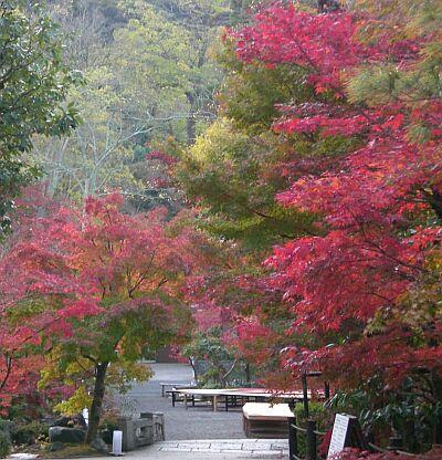 京都紅葉1縮小版永観堂入り口