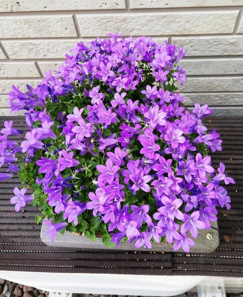 うちの庭春3