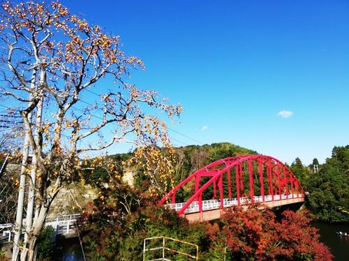 20201122亀山湖の赤い橋と柿