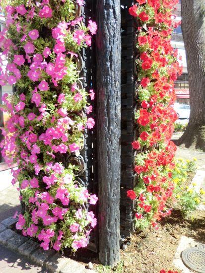 行徳駅前の花壇