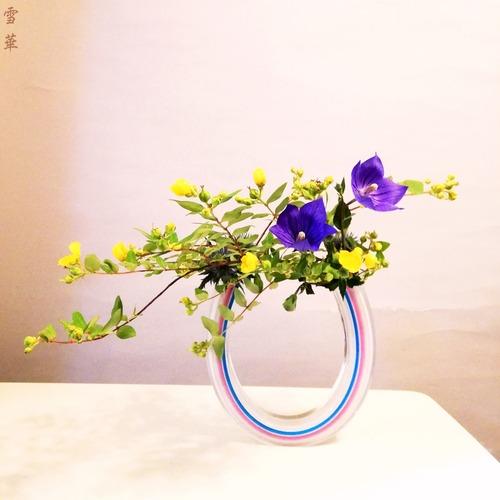 20210616キンシバイ、桔梗自由花