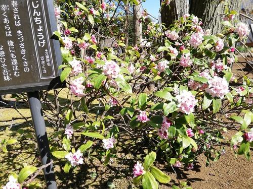 2020-3月の万葉植物園4