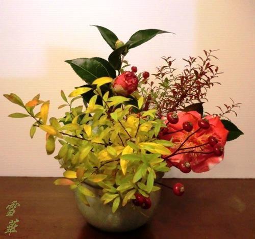20161116雪柳紅葉自由花縮小版