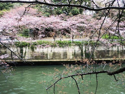 目黒桜並木