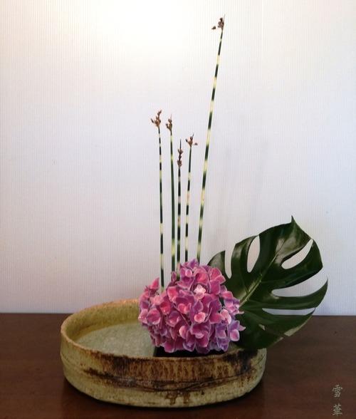 20190605紫陽花