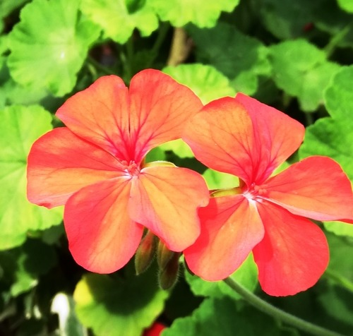 20210609ご近所の花