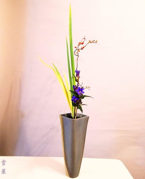 20201104生花三種オクラレルカ、つる梅