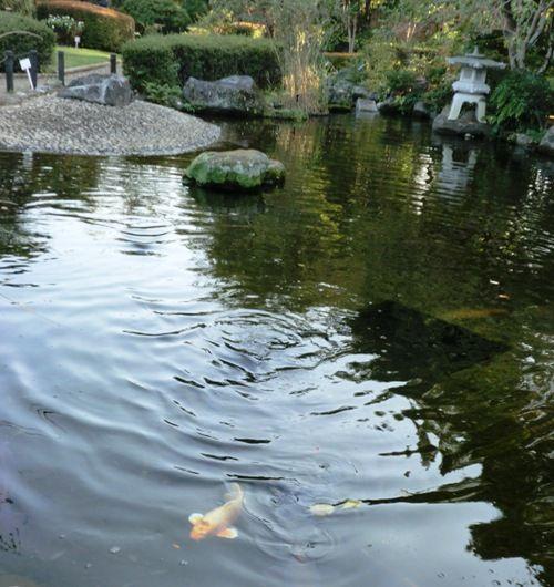 10月の万葉植物園鯉