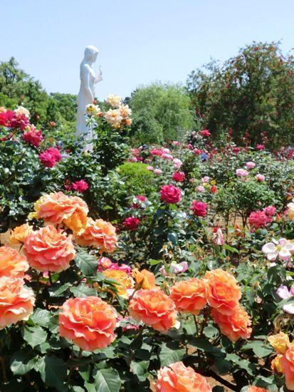 谷津バラ園銅像