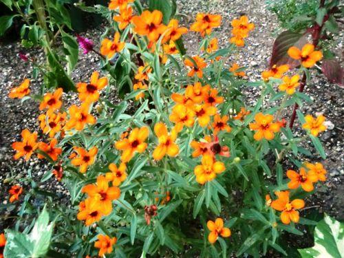 フローラルの黄色の小花