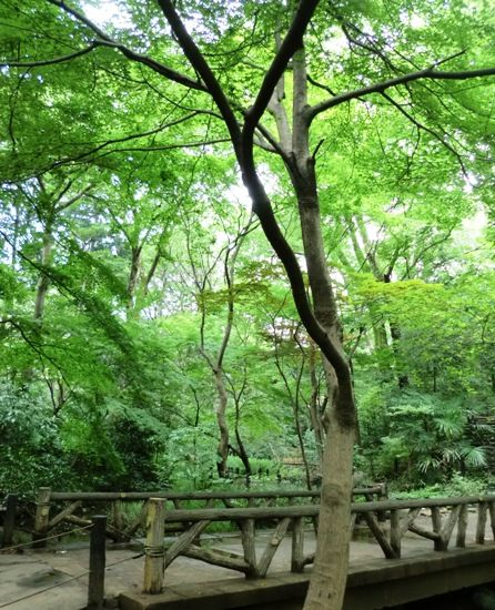 広尾散歩の有栖川宮庭園