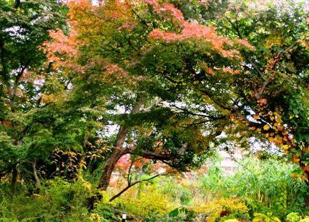 宝塚ガーデンフィールズの森