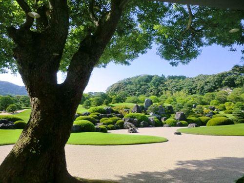 足立美術館庭園1大木から