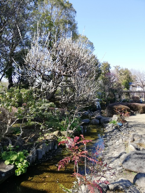 2020-3月の万葉植物園1