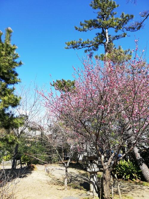 2020西船の春日神社の梅