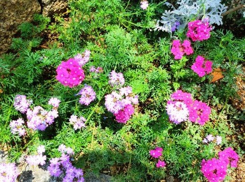 フローラルタウン内花壇