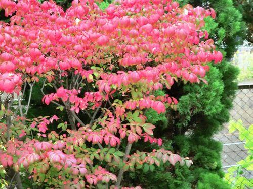 市川万葉植物園CIMG8457