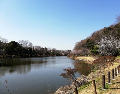 2020じゅん菜池緑地1