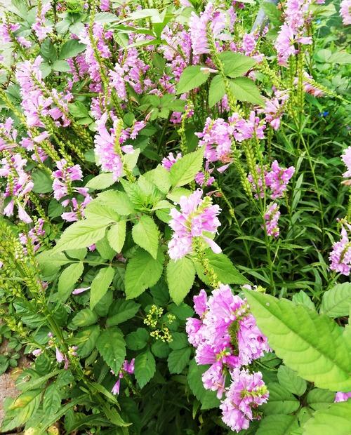 20210906ご近所の花