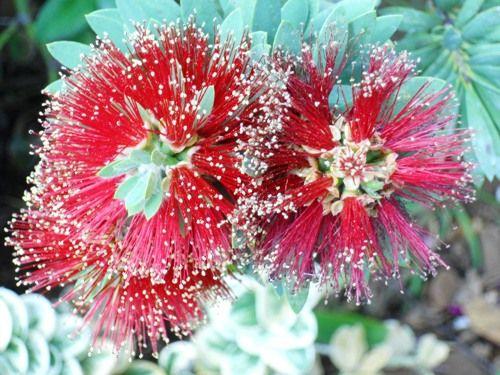 お父さんハワイ花の写真3