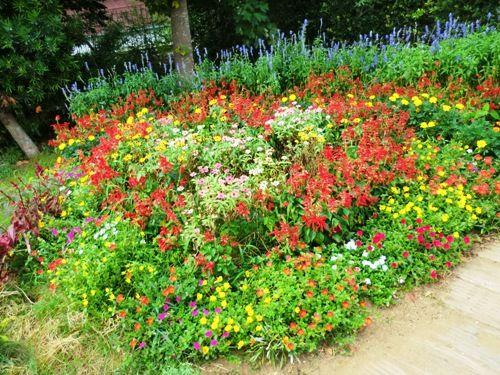 房総の花壇