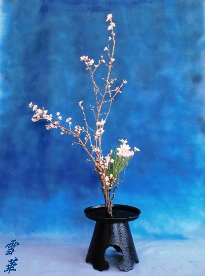 12-2-29桜一種生け縮小版