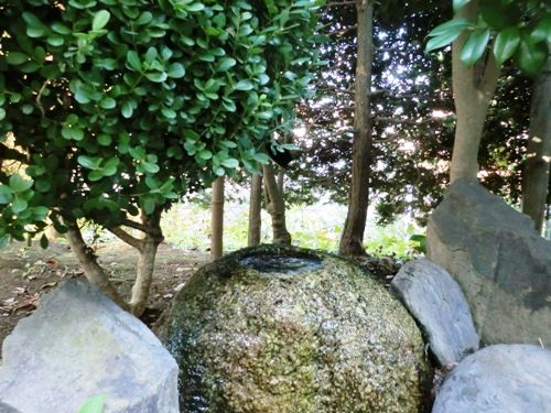 10月の万葉植物園2つくばい