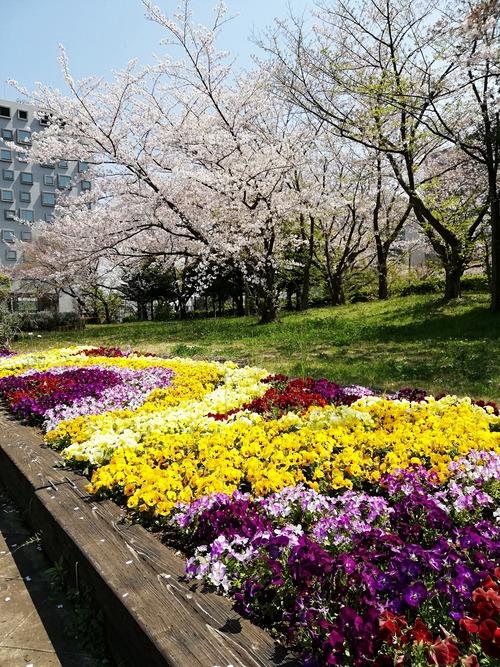 20200404新木場の桜と花壇