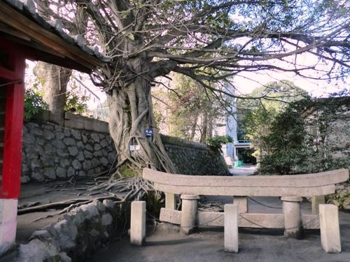 桜島の埋没した鳥居