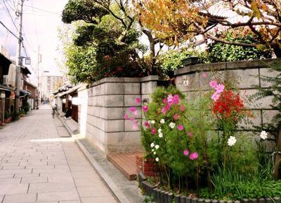 尼崎寺町 界隈のコスモス