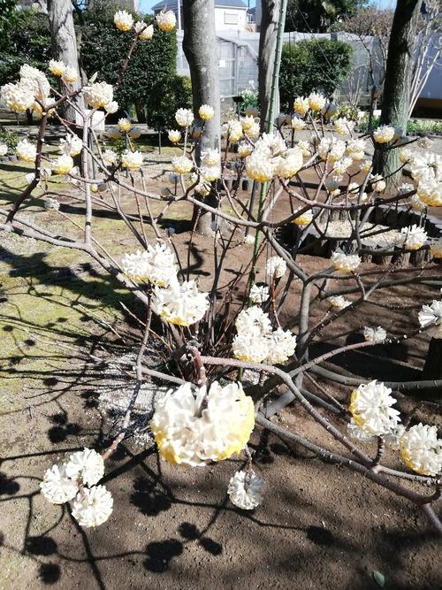 2020-3月の万葉植物園3