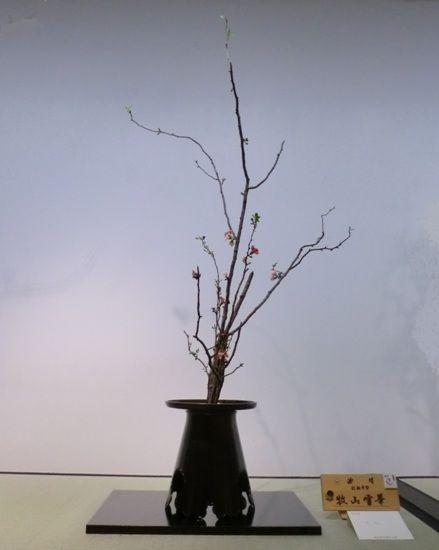 2018上野花展縮小版