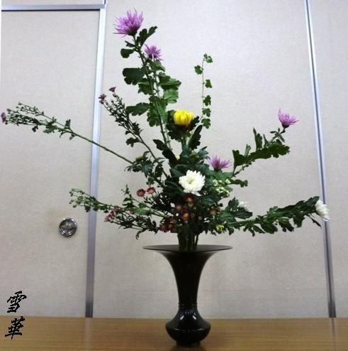 仁和会菊一色その2縮小版